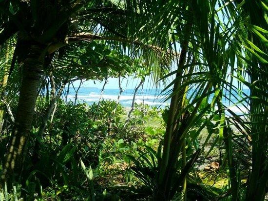 Hotel Banana Azul:                   Jungle near Banana Azul