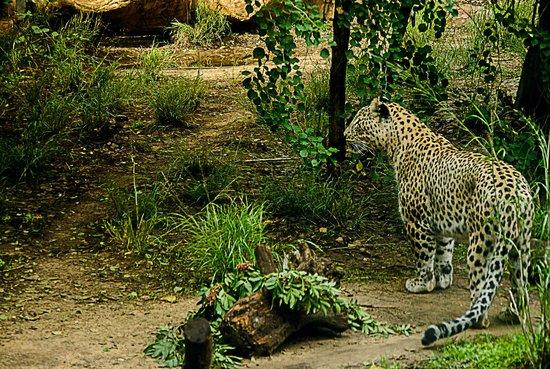 写真Safari Park枚