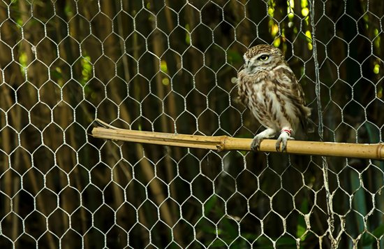 Safari Park:                   An owl