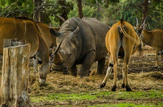 Safari Park:                   An infiltrator...