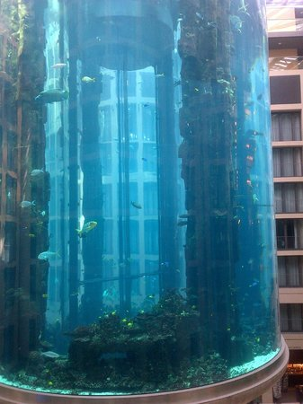 The big fish tank picture of radisson blu hotel berlin for Fish hotel tank