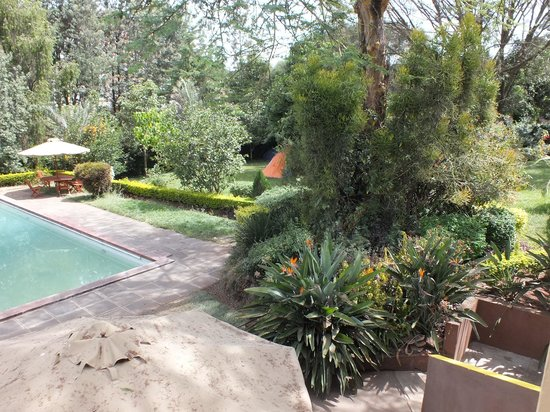 Milimani Backpackers & Safari Centre :                                     pool and garden