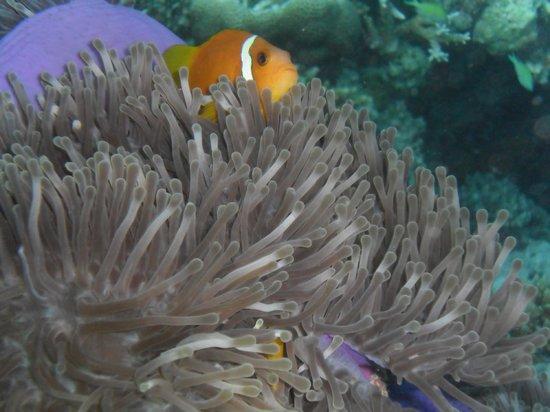 VOI Maayafushi Resort:                   pesci