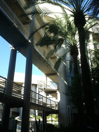 DoubleTree Suites by Hilton Hotel Phoenix:                   Palm Trees Abound