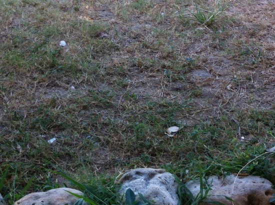 ลันตา ไนซ์บีช รีสอร์ท:                   papir og blerester flød i området, poolrenser så det, grinede og trak bare opg
