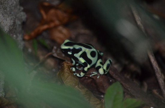 Coral Hill Bungalows:                   Resident Frog
