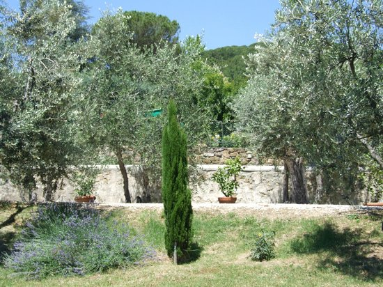 Villa Nobili B&B: Olive oil and lemon trees at B&B Villa Nobili