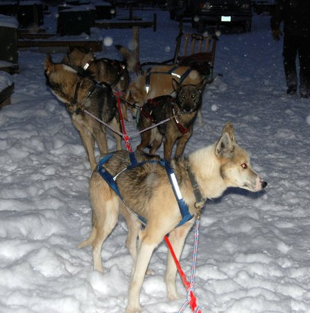 Muddy Paw Sled Dog Kennel - Day Tours:                   Winter Evening Dog Sled Ride