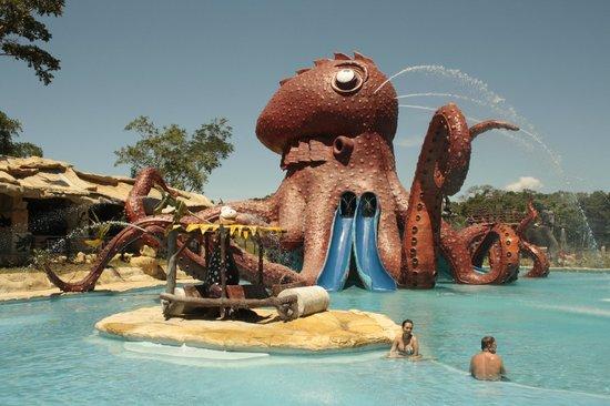 Puerto Triunfo, Colombia: Octopus