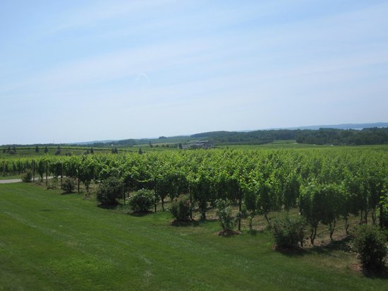 The Inn at Chateau Grand Traverse:                   Vineyard