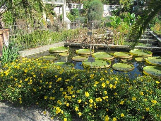 Orto Botanico:                   water plants in garden