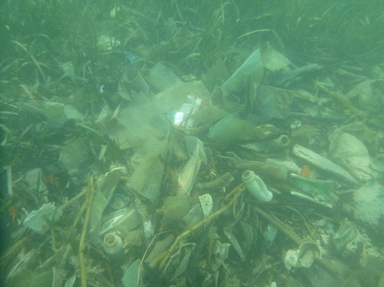 French Harbour, Honduras:                   Some of the garbage you will find underwater near the Gazebo beach.