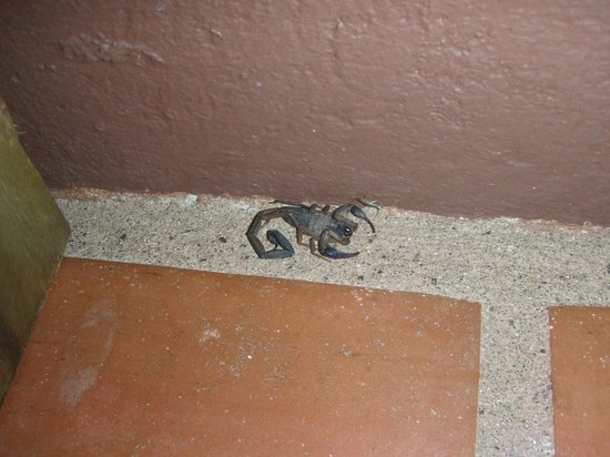 Hotel Punta Islita, Autograph Collection:                                     Put towes along the door to keep these guys out!
