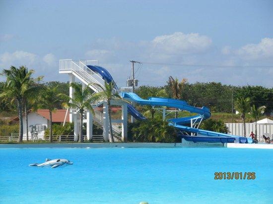 Hotel Playa Blanca Beach Resort :                   Slide at the big salt water pool