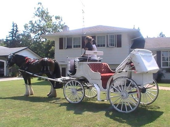 The Irish House Bed and Breakfast : Horse and Carriage Ride into Town