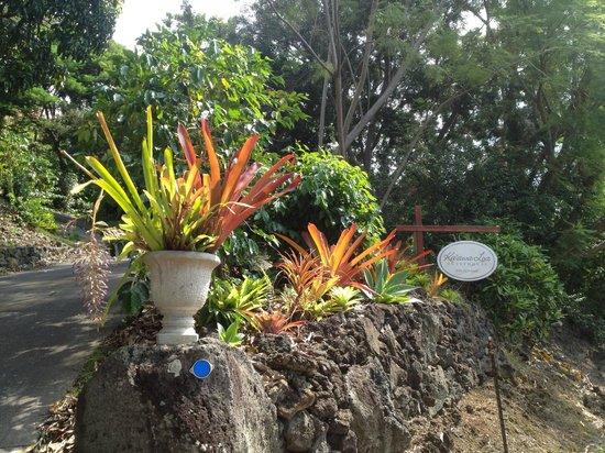 Ka'awa Loa Plantation:                                     Aloha!