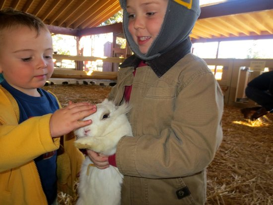 Petting Zoo Is So Much Fun Picture Of Zoomars Petting Zoo San
