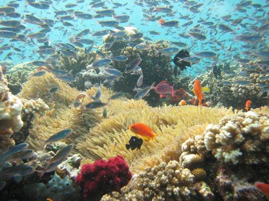 Nakia Resort & Dive:                                     Mother Natures Fishtank