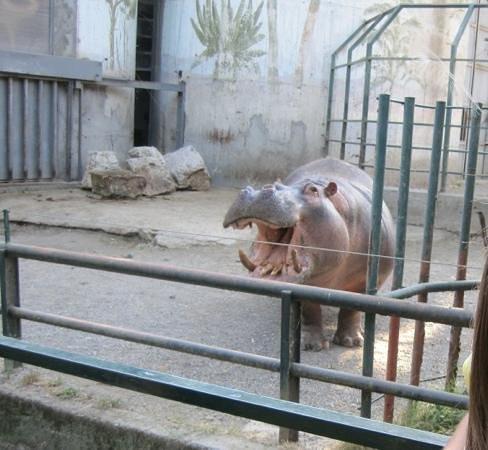 Giardino Zoologico di Pistoia :                   ippo