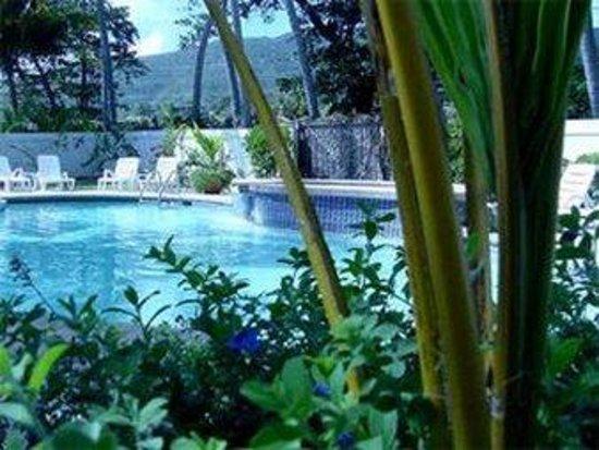 Caribe Playa Beach Hotel: Pool