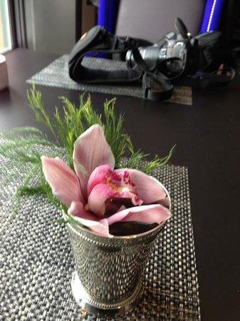 Trecento Quindici Decano:                   orchid