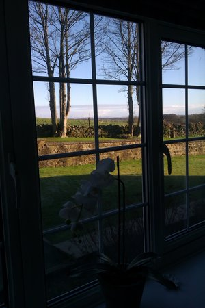 Green Acres & Cherry Blossom Cottage:                                     view from bedroom x