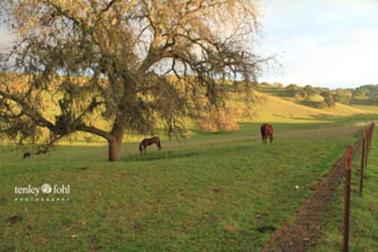Santa Ynez Valley is for Horses and Horse Lovers