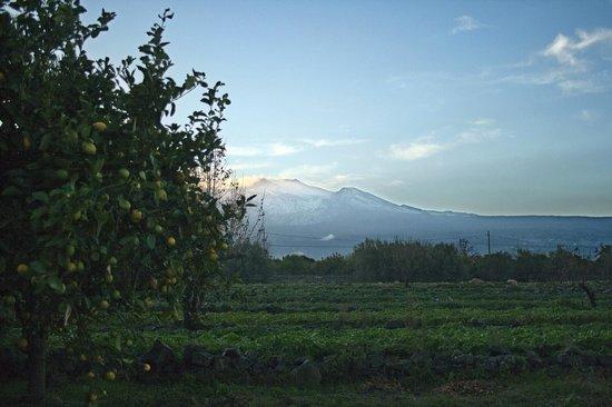 Agriturismo dell'Etna:                   view of Etna at dusk