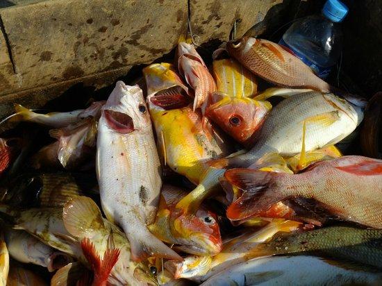 Bay of Bengal Resort:                   Local catch