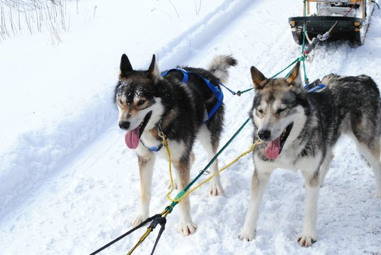 "Muddy Paw Sled Dog Kennel - Day Tours:                   Mars and Squeaky, our ""wheels"