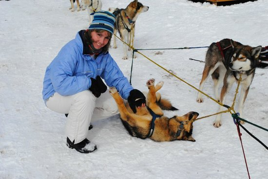 "Muddy Paw Sled Dog Kennel - Day Tours:                   ""Maggie gets a belly rub when we stop for a break"