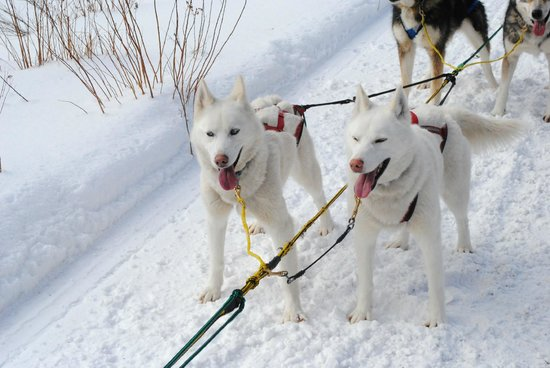 Muddy Paw Sled Dog Kennel - Day Tours:                   Sweetest dogs ever!