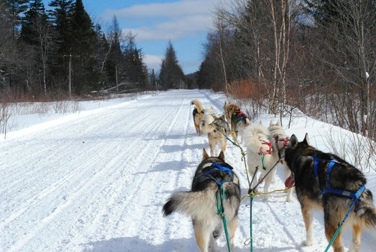 Muddy Paw Sled Dog Kennel - Day Tours:                   On the trail