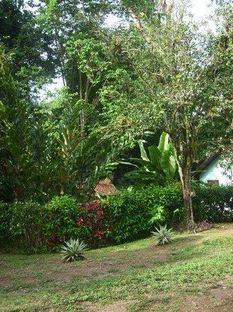 Cabinas Wolfsong:                   Umgebung/Garten