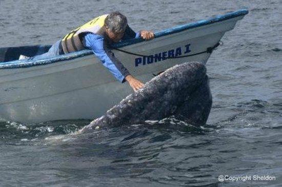 Hotel Villas Mar y Arena Ecotours:                                     Whale petting