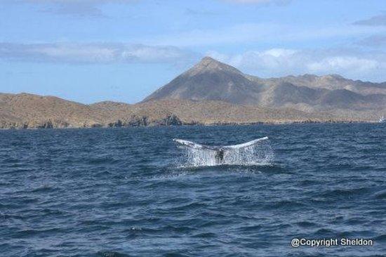 Hotel Villas Mar y Arena Ecotours:                                     whale