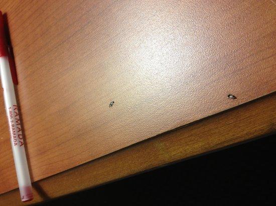 Ramada Lakeland:                   Bugs
