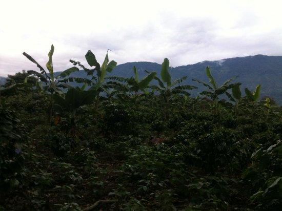 Hacienda Combia:                                     La région du Café
