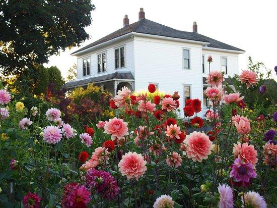 London Heritage Farm :                                                       Dahlias