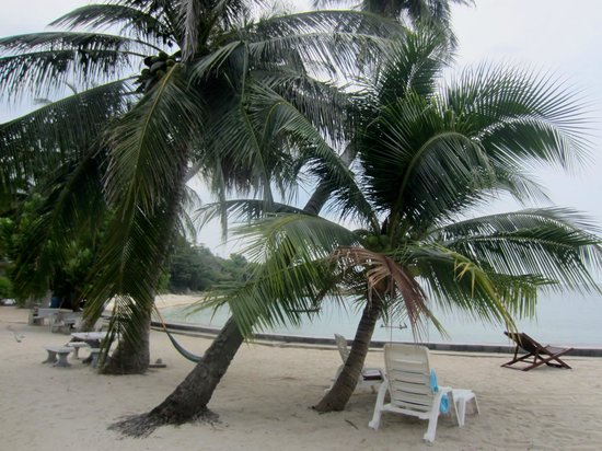 Haad Tian Beach Resort Koh Phangan:                   Over cast but still beautiful relaxing seating under a palm tree on the beach