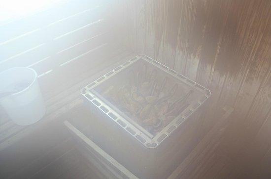Pacific Palace Hotel:                   sauna bath