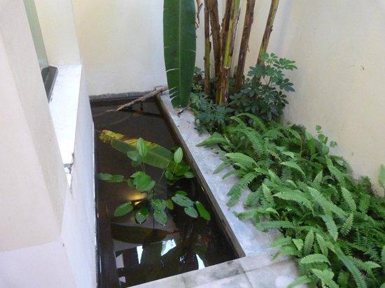 Bhu Nga Thani Resort and Spa:                   Pond outside the room