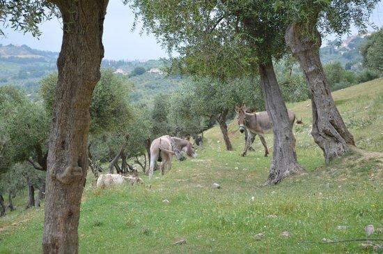 Agriturismo Le Mole sul Farfa:                   also roman farm