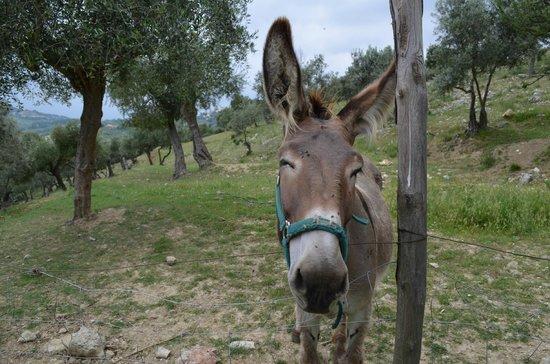 Agriturismo Le Mole sul Farfa:                   donkey