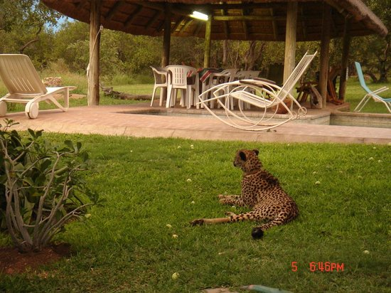 Marula Camp:                                                       View from the chalet.