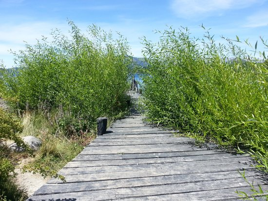 Penon Del Lago Lodge & Resort:                   Las plantas tapando el muelle