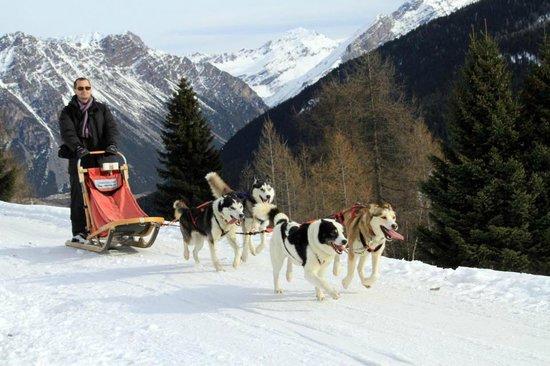 Centro Italiano Sleddog Husky Village:                   sled dog experience