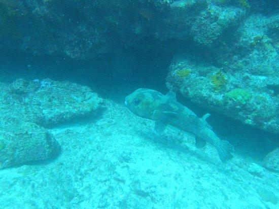 Ilha do Sal, Cape Verde:                                     pesce scatola