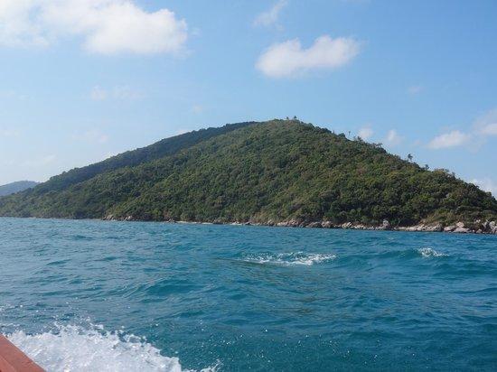 เกาะแตน