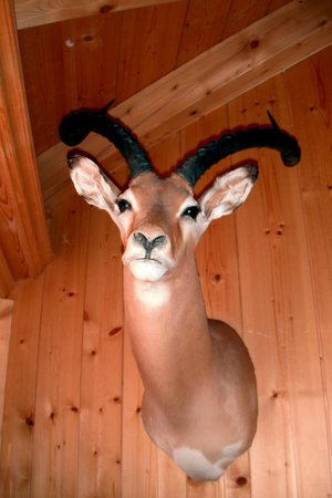 Chalet du Mont d'Arbois :                   Ever wonder why there are no big animals in the French Alps? They're all hangi